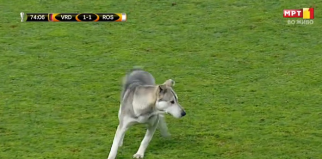 Неочекуван гости на  Филип Втори   Куче го прекина мечот меѓу Вардар и Розенборг