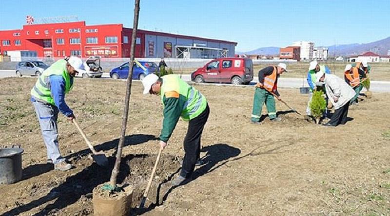 Проект со зеленило против загадувањето во општина Илинден