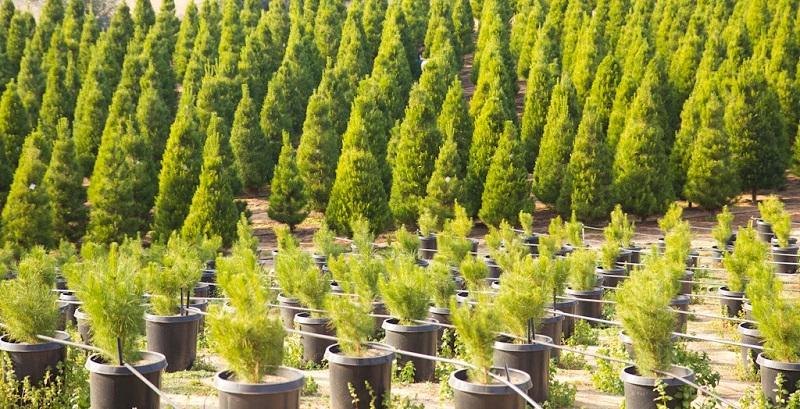 Владата ќе ги разгледува ефектите од Денот на дрвото