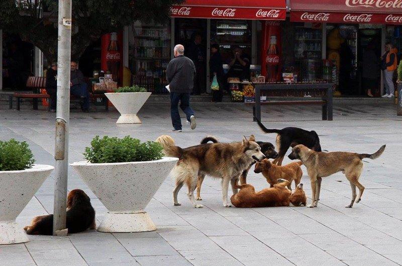 Од 60 000 180 000 денари оштета ќе ви исплати Град Скопје ако ве касне куче скитник