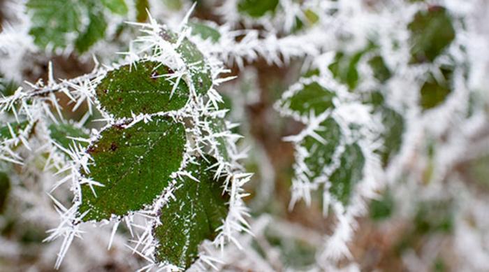 Предупредување од УХМР  Од утре до недела снег и замрзнат дожд во цела Македонија